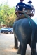 Riding and Bathing Elephant in Kanchanaburi Tour