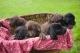 คนขายสุนัข และลูกสุนัข 7 ตัว