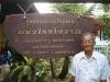 ลุงปรีชา ผู้ดูแลศุนย์อนุรักษ์ และผู้เชียวชาญแมวไทยโบราณ