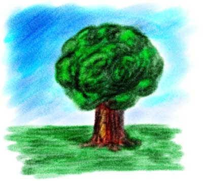 คุณเป็นต้นไม้ประเภทไหน