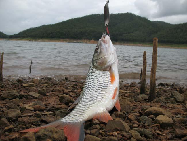 สูตรลับเหยื่อตกปลาทุกชนิดของไทย
