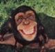 กะปิ..ในมือลิง (คำสอนของพระพุทธองค์)