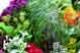 สมุนไพรธรรมชาติ จากภูมิปัญญาไทย Part 4