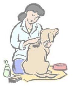 การอาบน้ำสุนัข