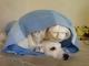 ไม่อยากให้สุนัขนอนในกรง ควรดูแลอย่างไรดี