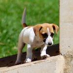 8 วิธีการดูแลน้องหมาที่รัก: เรื่องง่ายๆ สไตล์น้องหมา