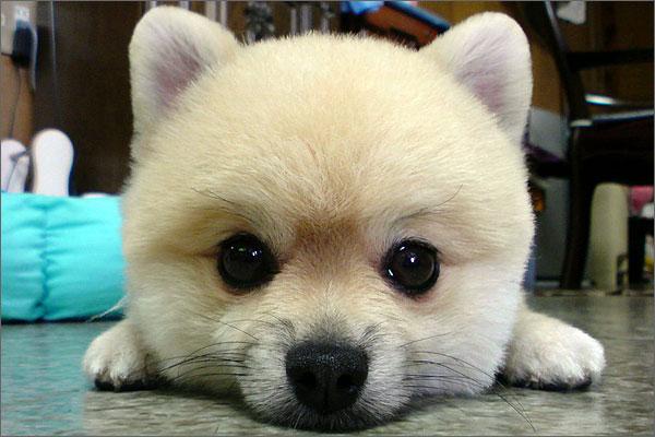 โรคทางพันธุกรรม ที่มักพบในสุนัข 15 สายพันธุ์