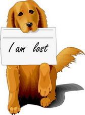 การตามหาสุนัขหาย