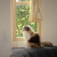 ชิสุและแมว...พวกเขาสามารถเข้ากันได้ไหม