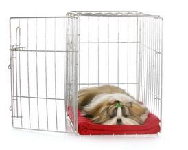 ห้องนอนของสุนัขชิสุ: กรง, ที่นอนสุนัข, หรือ เตียงของคุณ