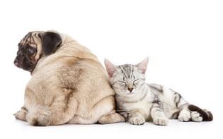 คุณบอกได้ไหม ถ้าสัตว์เลี้ยงของคุณมีอาการเจ็บปวด