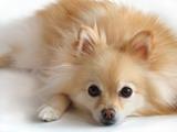 ทำไมสุนัขถึงป่วยเป็นโรคพยาธิหนอนหัวใจ?