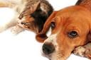 การดูแลสุนัข  การให้อาหาร การทำความสะอาด การป้อนยา การอุ้มสุนัข