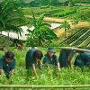 เกษตรทฤษฎีใหม่ แนวเกษตรพอเพียง (New Theory Agriculture)