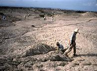 ซากดึกดำบรรพ์ (Fossil)