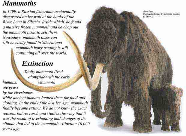 Mammoth Tusk Perfect - Out of Stock #783768