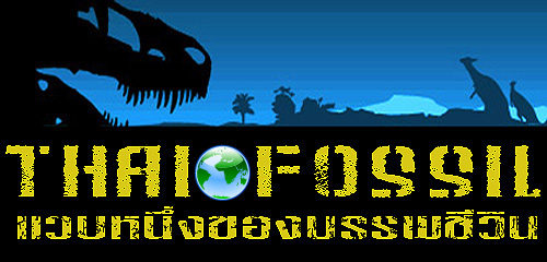 Thaifossil.com